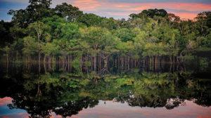 Descubre cuáles son las 7 Maravillas Naturales del Mundo: Amazonia